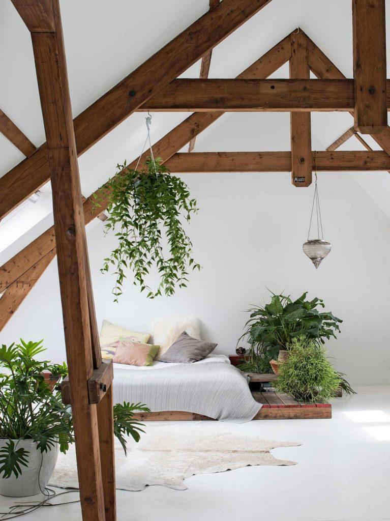 Decoración de estilo nórdico - PORXA - plantas de interior
